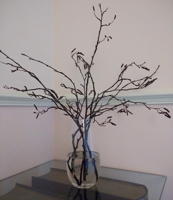 catkins on display