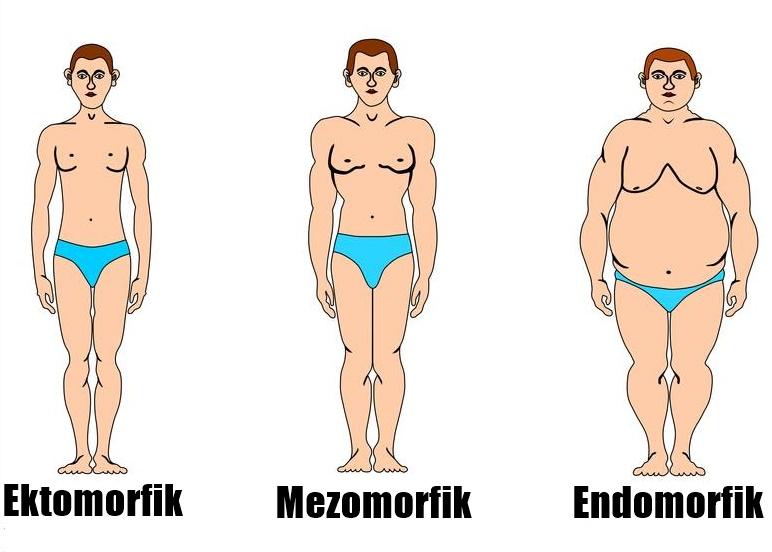 Znalezione obrazy dla zapytania endomorfik
