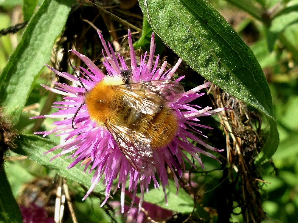 Chris Lansdell's Birding & Nature Diary: August 2013