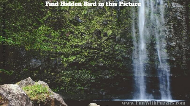 Test your observational skills by finding hidden bird in this picture puzzle image