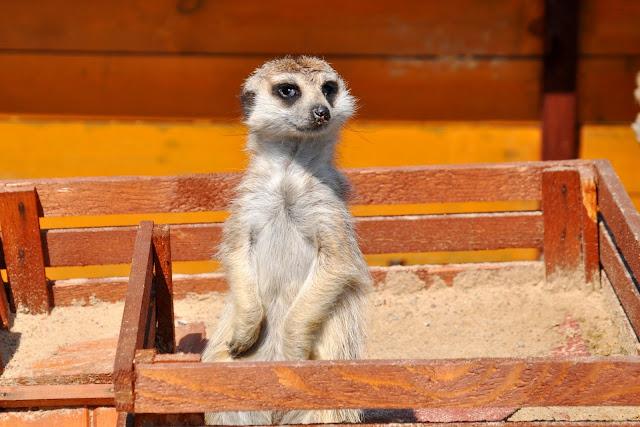 Zwierzęta w Lemur Parku