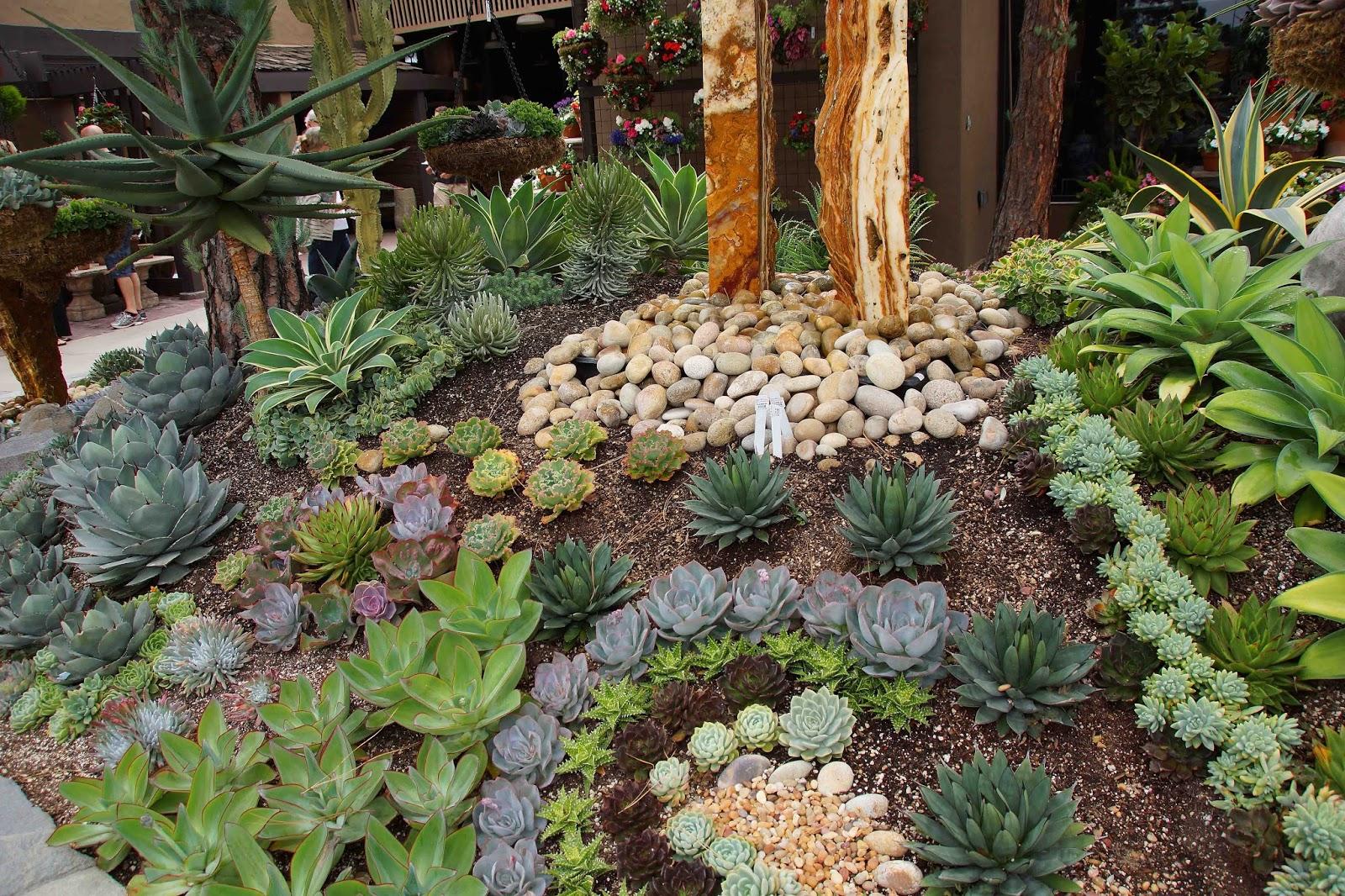 Succulent tapestry - Jardines con cactus y piedras ...