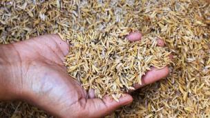 rice husks green energy