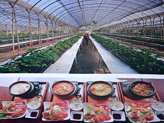Gambar Agrowisata Taiwan Dengan Konsep Wisata Halal