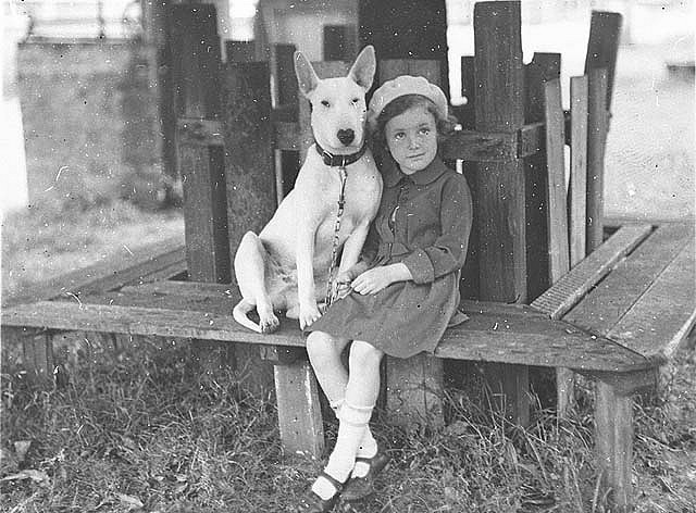 Margaret Shaffhauser with bull terrier at the Canine Association Show, 3 Nov 1934