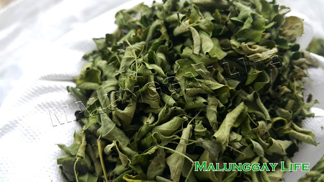 dried-moringa-leaves