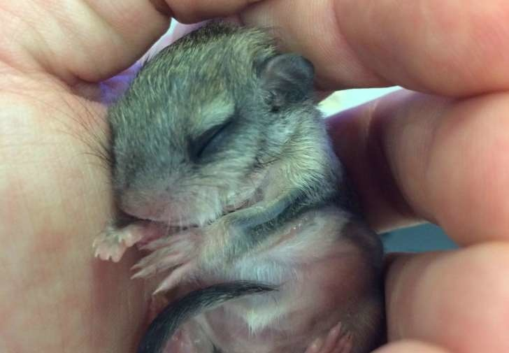 Jeff was told the critter would die after he posted some photos online. - This Guy Saved A Tiny Animal, But Had No Idea What It Actually Was.