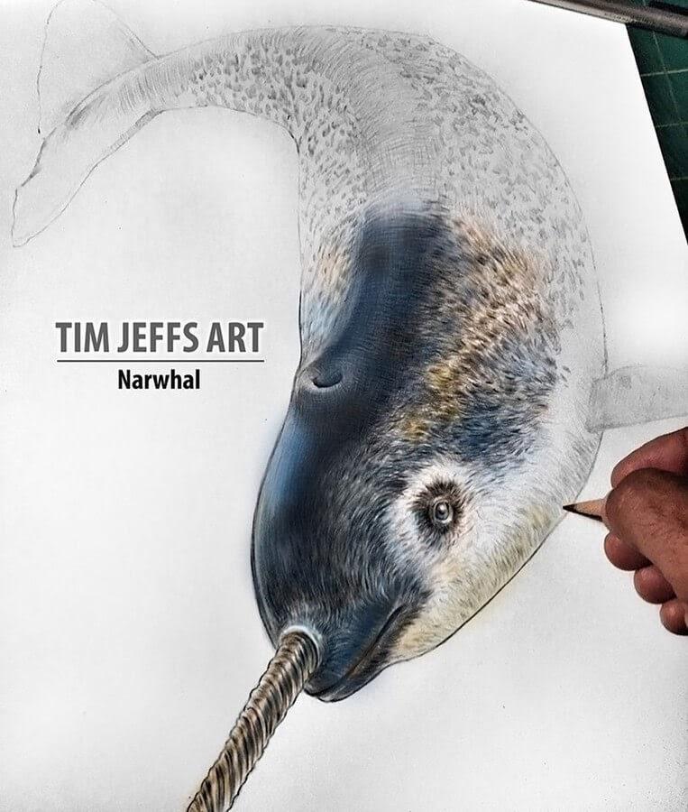 05-Narwhal-Tim-Jeffs-www-designstack-co