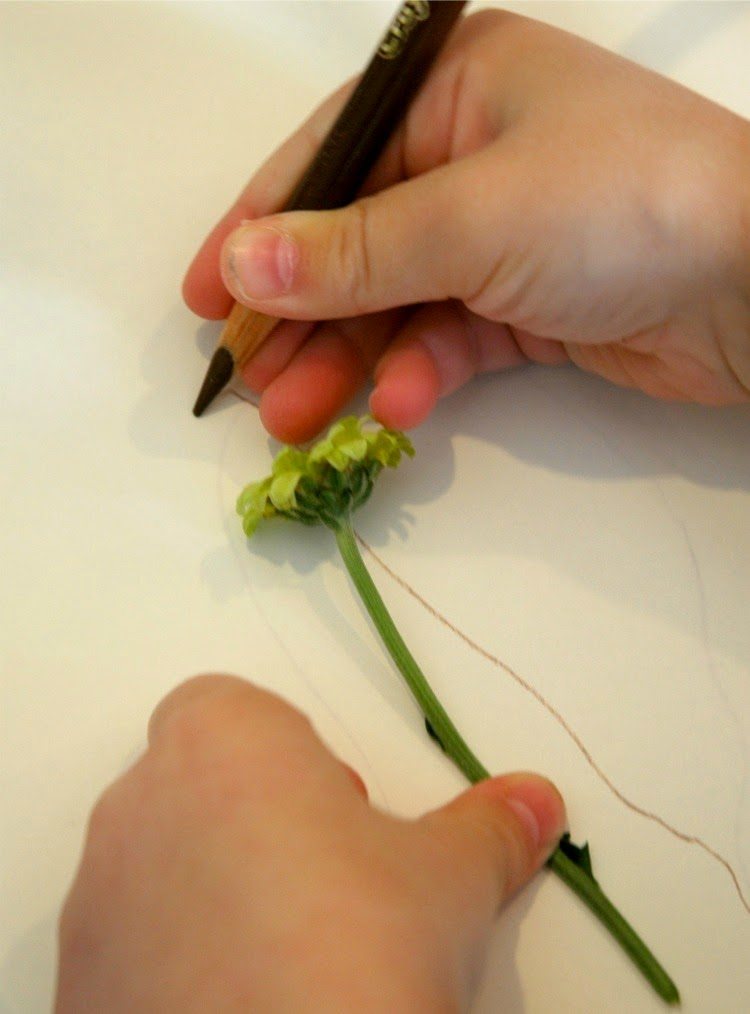 Preschool Flower Exploration- Science for Kids