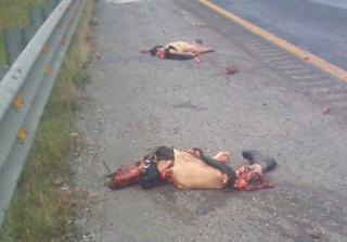 Hombre queda destrozado por presunto auto en autopista Córdoba-Veracruz