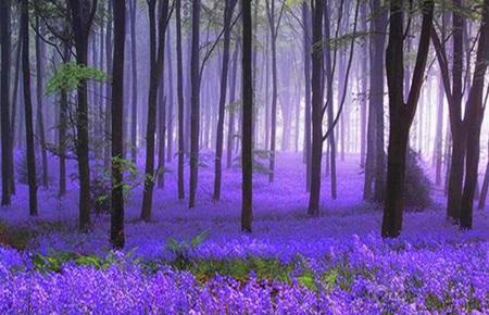 Hutan-Hutan Paling Misterius di Dunia