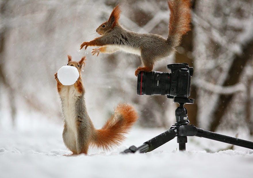 adorable squirrel photos vadim trunov-1