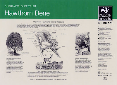 Interpretive Panel Illustrations Hawthorn Dene County Durham North East UK by North East artist & illustrator Ingrid Sylvestre