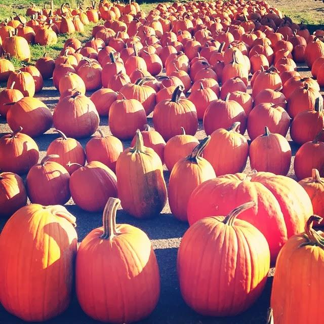 Pumpkin patch ligonier in.