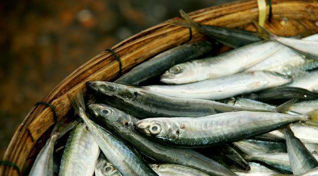 Apa Perbedaan Antara Ikan Asin dan Sarden