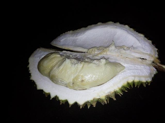 Makan Durian medan
