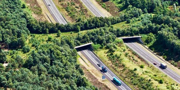 pontes-verdes-ecodutos-travessia-passagem-de-animais