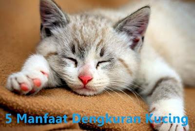 manfaat dengkuran kucing bagi kesehatan