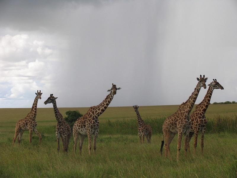 Maasai%2BMara