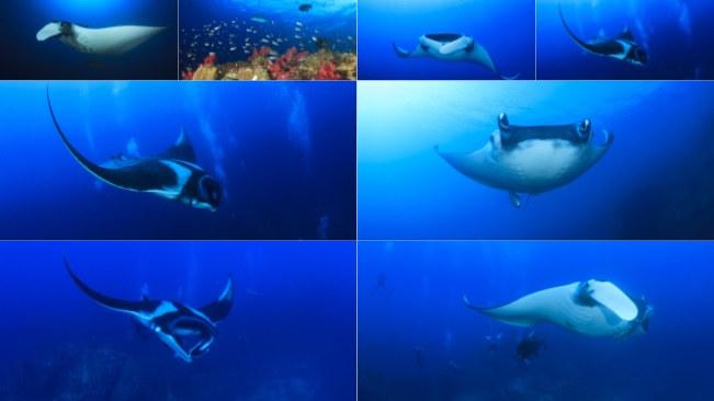 تحميل 8 صور للسمك في البحر بجودة عالية