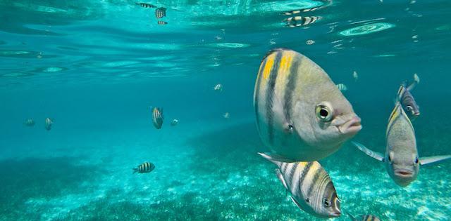 Snorkel no Parque Garrafon Natural Reef Park em Cancún