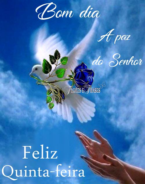 Flores e Frases: BOM DIA....