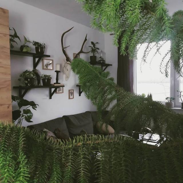 Jak dbać o rośliny doniczkowe zimą?