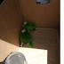 Asegura Profepa tres polluelos de loro y pone a disposición de la PGR al vendedor