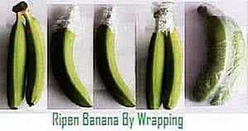 Effect of wrapping on banana ripening
