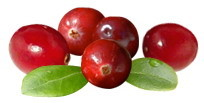 Cranberry Fruit vs Urinary Tract Infections UTIs