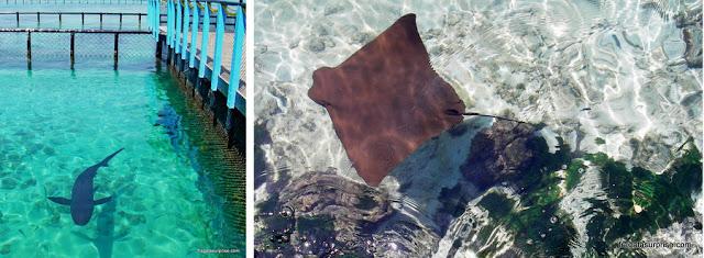 Tubarão e arraia no Aquário San Martín, Ilhas do Rosário, Colômbia