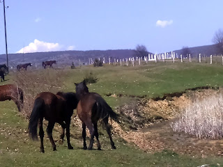wild horses in Bosnia and Herzegovina