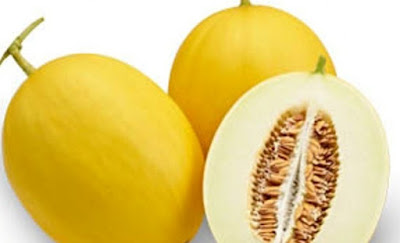 cara budidaya melon emas