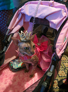 Coco, the Cornish Rex, in her tiara at BlogPaws, Photo by Catherine Armato