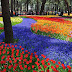 Jalan-jalan Ke Taman Bunga Empat Musim Di Jepang , Hitachi Seaside Park