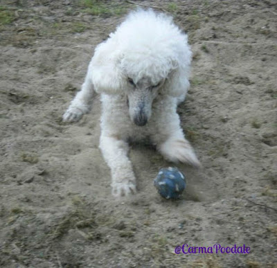 Carma playing with ball in sand