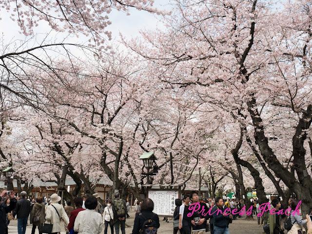 靖國神社滿天櫻花