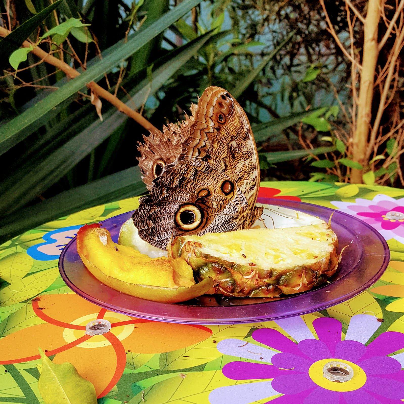 Butterfly Forest: The Wordless Or Not So Wordless Wednesday Link Up