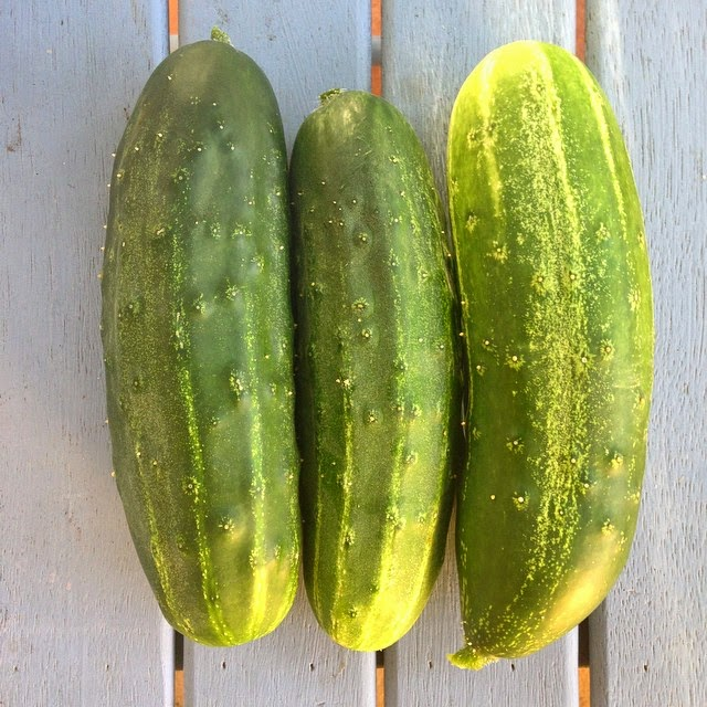Home Grown Cucumbers from the Garden