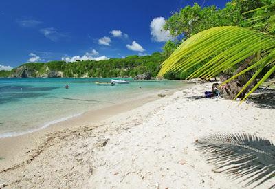 Plage couleur azur de sable banc avec branche de cocotier  au Gosier en Guadeloupe