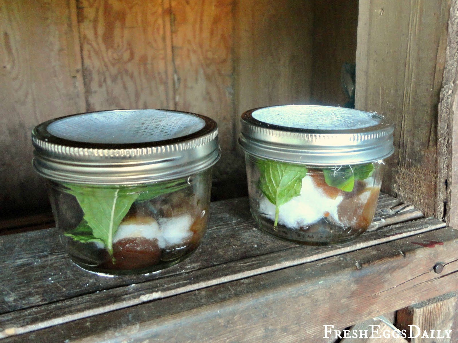 DIY Fly Strips + More Ways to Control Flies in your Coop and Run