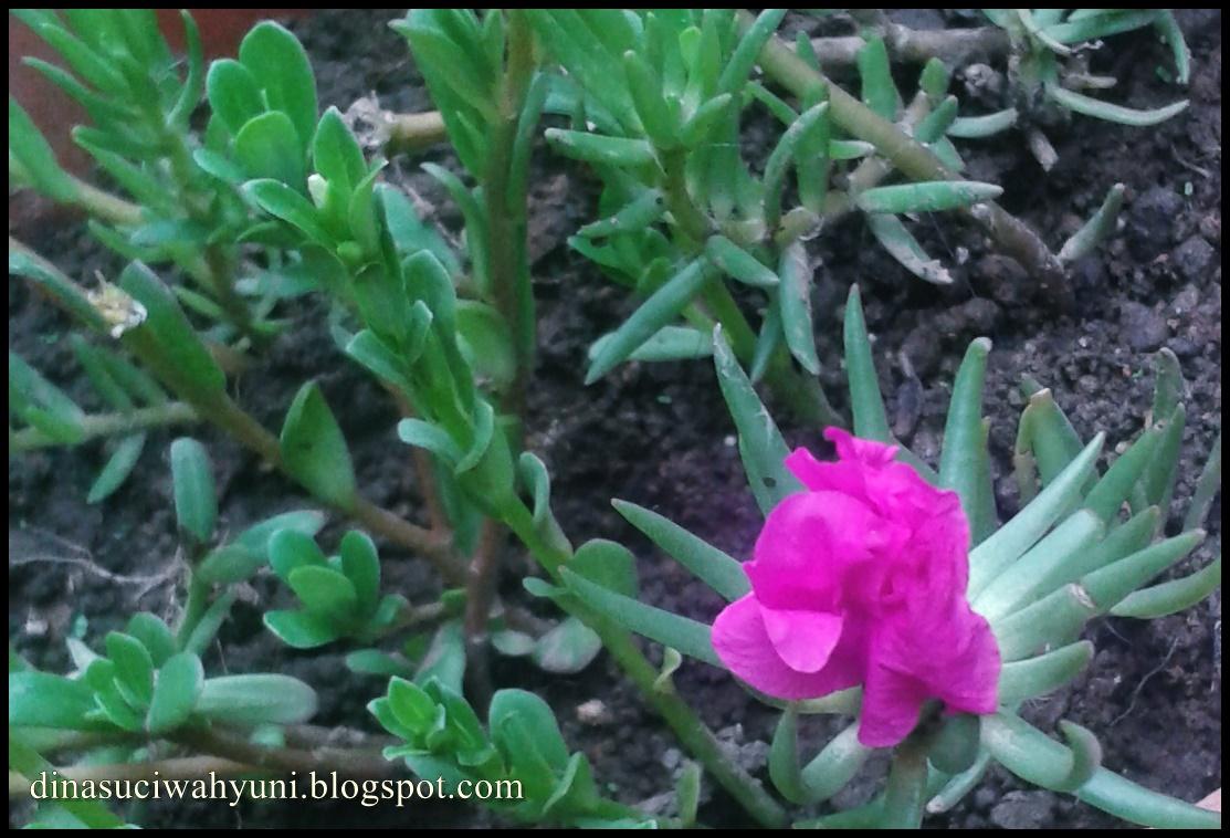 Jenis Dan Nama Nama Bunga Tanaman Hias Quot Bunga Cantik