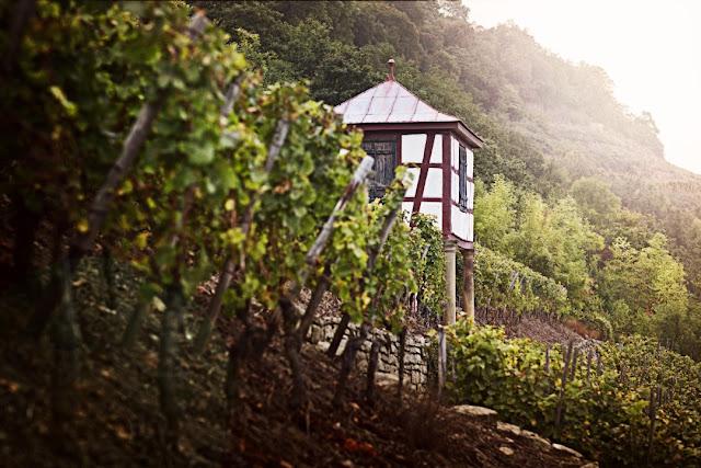 Weinlage Disibodenberg an der Nahe