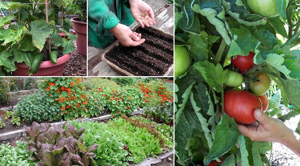 Comment devenir un Eco - jardinier