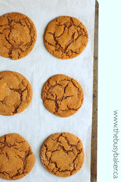 These Best Ever Ginger Molasses Cookies definitely live up to their name!! Recipe from www.thebusybaker.ca