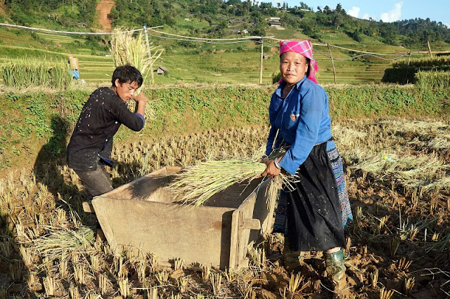 The attractive experience for Mu Cang Chai Tourism 1