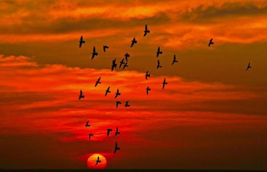 Kanatsız Kuşlar