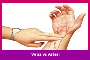 Sebutkan Perbedaan Pembuluh Arteri dan Vena ?