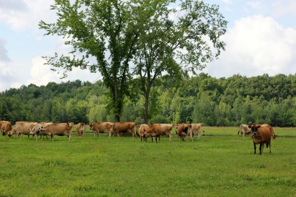 Stonyfield Farm Tour