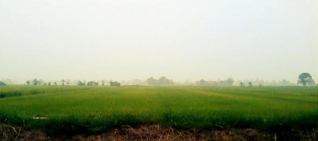 Sawah Padi di Kampung Sawah Sempadan, Tanjung Karang